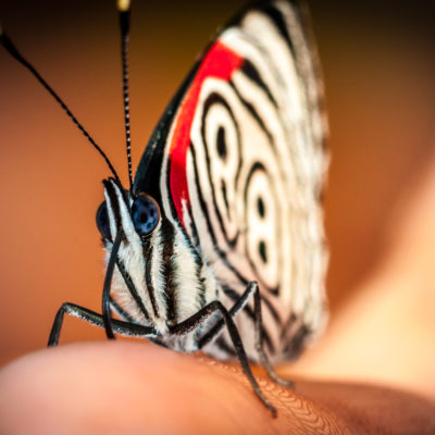 Butterfly – Awasi Iguazu – PH Miguel Cesar