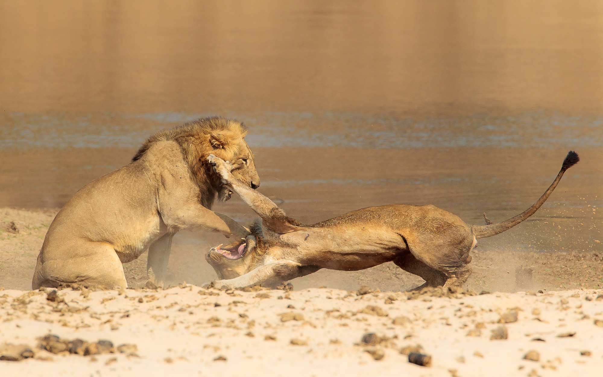 Joro Experiences Safari