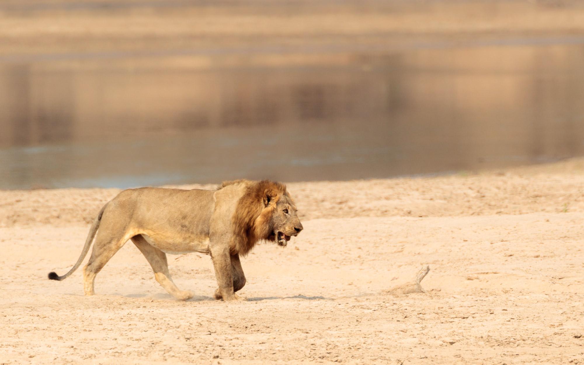 Joro Experiences African Safari