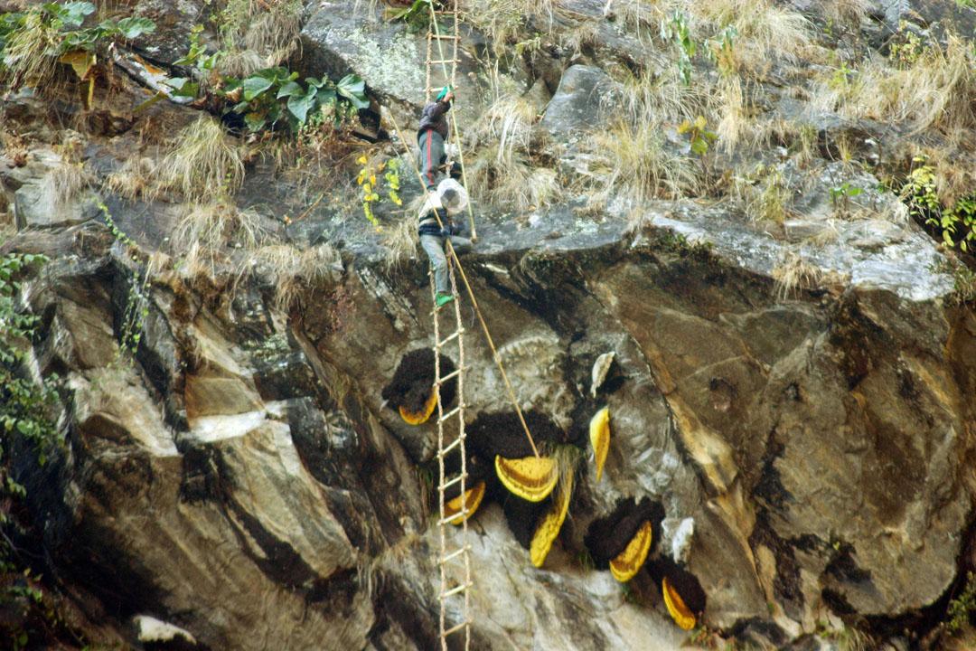 Joro Experiences Honey Hunters Nepal