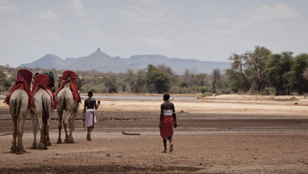 Men leading camel caravan in desert terrain