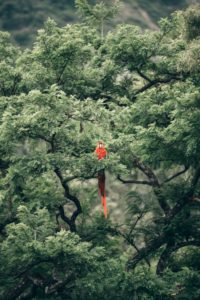 A macaw sits in a tree in the jungle
